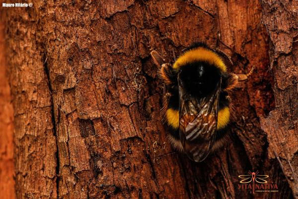 hoteis-para-insectos01.jpg